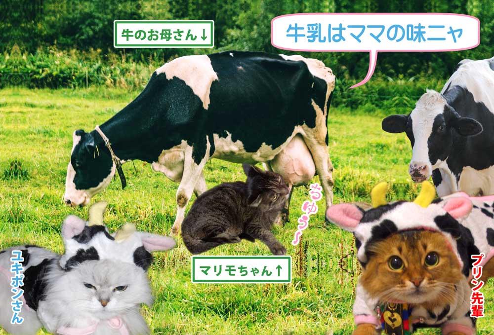 2021-02-15-Mon-01-乳牛-4406111_l