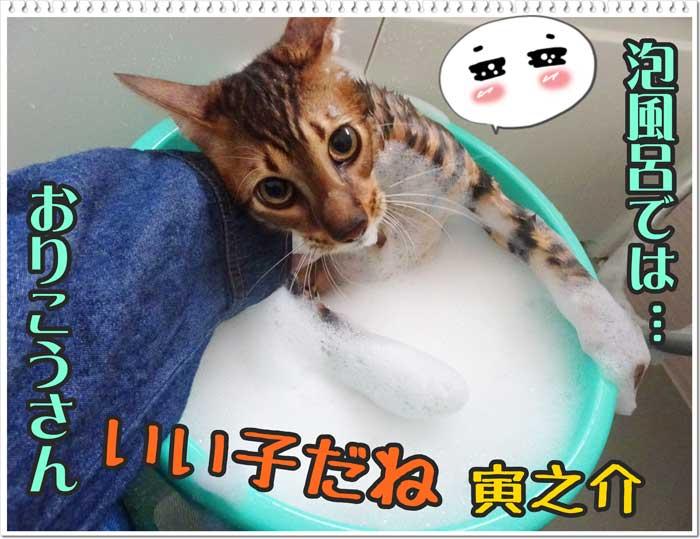 トイガ―猫の寅之介くん初めてのお風呂♪
